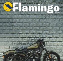 flamingo-front-cover-1